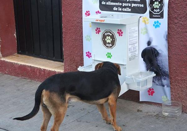 cómo ayudar a perros abandonados en la calle