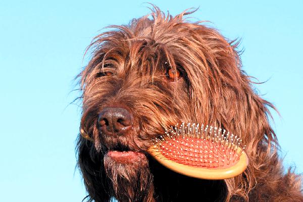 remedios para la caída del pelo del perro