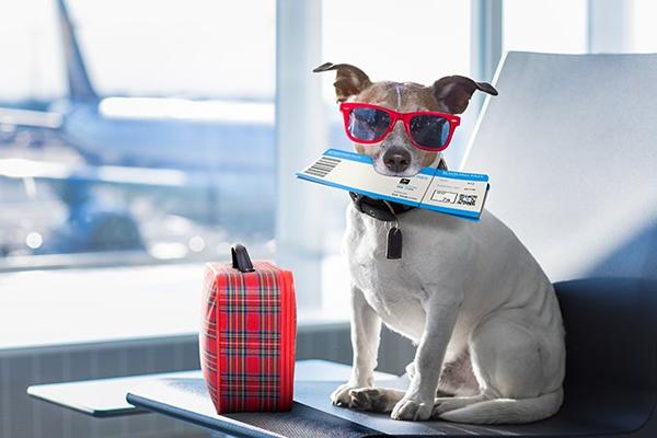 requisitos para el ingreso con un perro a méxico