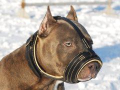 el mejor seguro para perros potencialmente peligrosos en españa