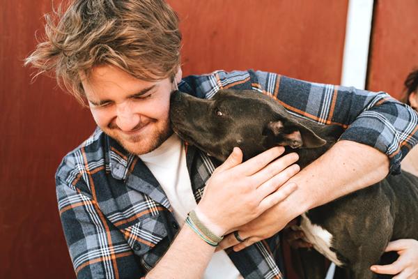 proceso de adopción de un perro en españa
