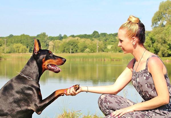 pasos para adiestrar un perro