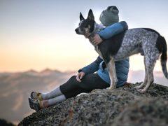 esperanza de vida según la raza de un perro
