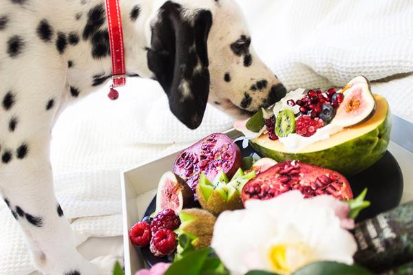 frutas permitidas para los perros