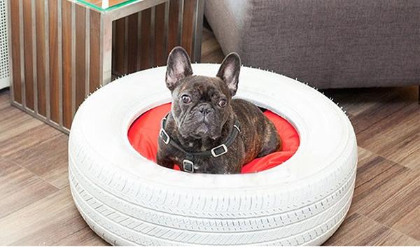 cama para perros con un neumático