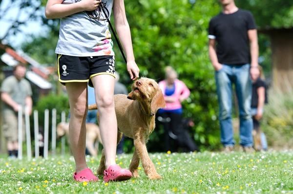 el refuerzo positivo en el adiestramiento canino y no el castigo