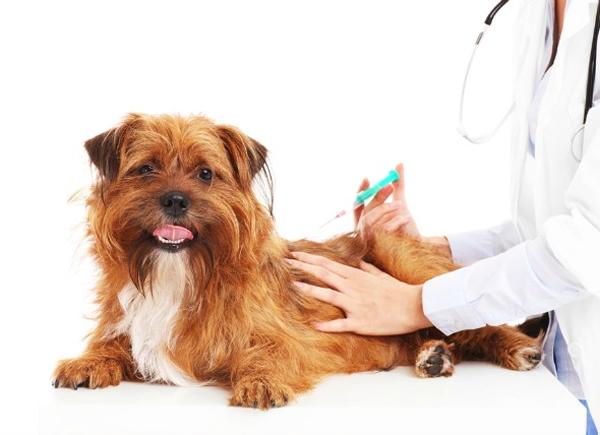 calendario de vacunas obligatorias para perros