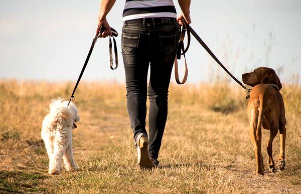 consejos para sacar a pasear al perro
