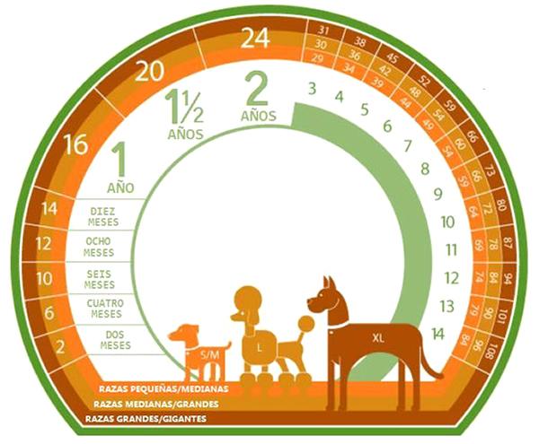tabla comparacion edad perro humano