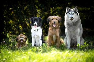Todas las razas de perros del mundo
