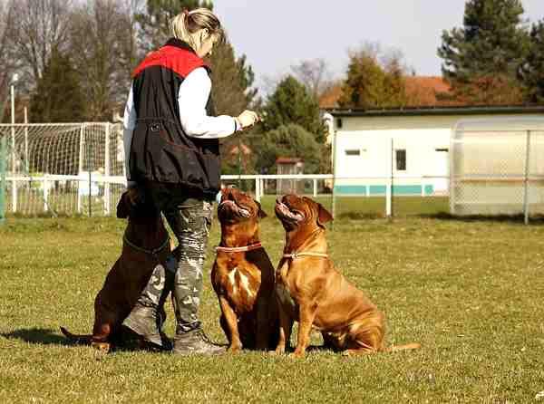 descargar manual de adiestramiento canino de perros gratis en pdf