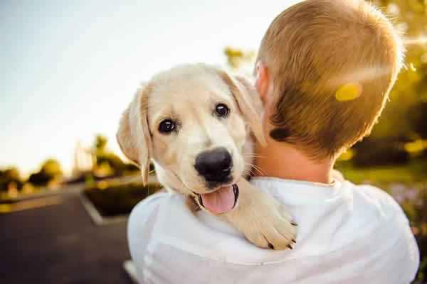 Dónde Adoptar Perros En Madrid Dirección Y Teléfono De Protectoras