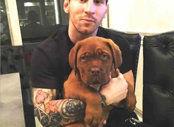hulk, el perro de messi, foto del tamaño y el peso del perro del jugador como cachorro