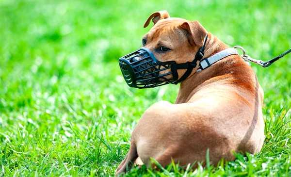razas de perros deben usar bozal, foto de perro con bozal