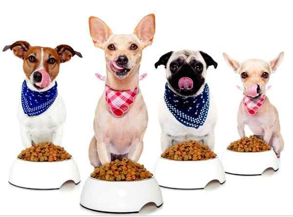 elegir el mejor alimento para perros, pienso para perros