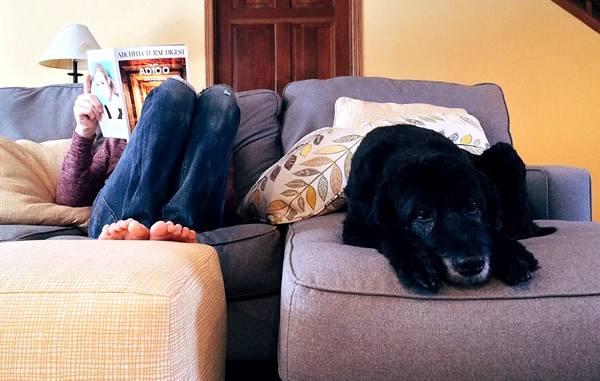 qué hacer para pasar la cuarentena con el perro en el piso, la casa o el departamento