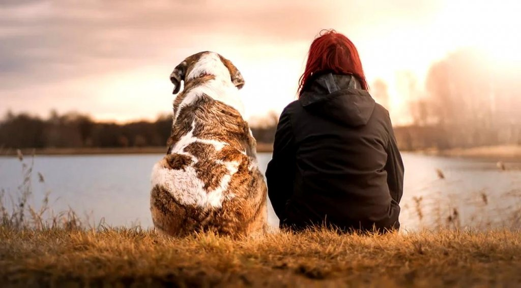 beneficios de adoptar un perro como mascota en españa, argentina, mexico