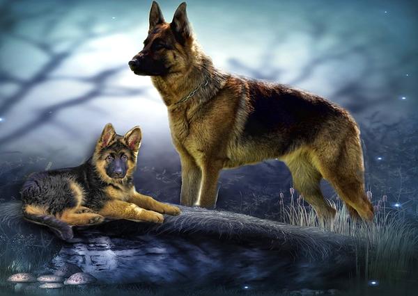 obtener el pedigree de un perro en españa, méxico, argentina y otros países
