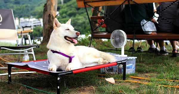 sintomas de un golpe de calor en los perros y como evitarlo