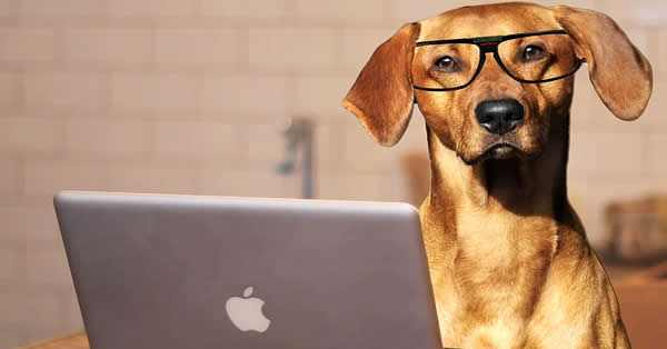 top 10 de las razas de perros más inteligentes del mundo