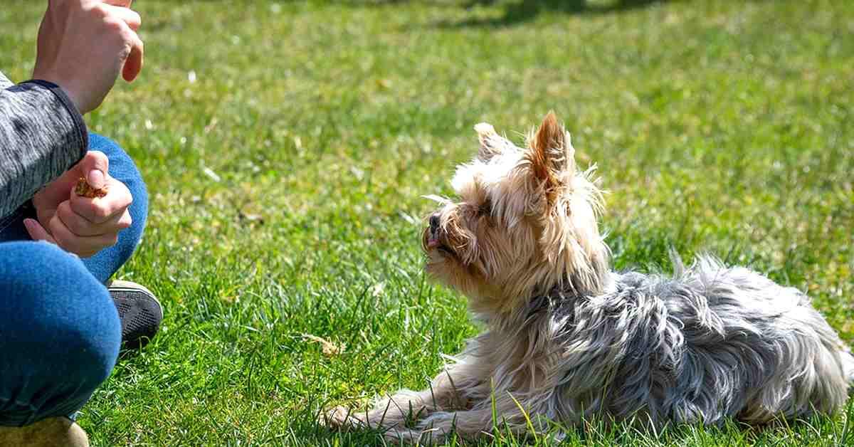 curso de adiestramiento canino y psicologia temario