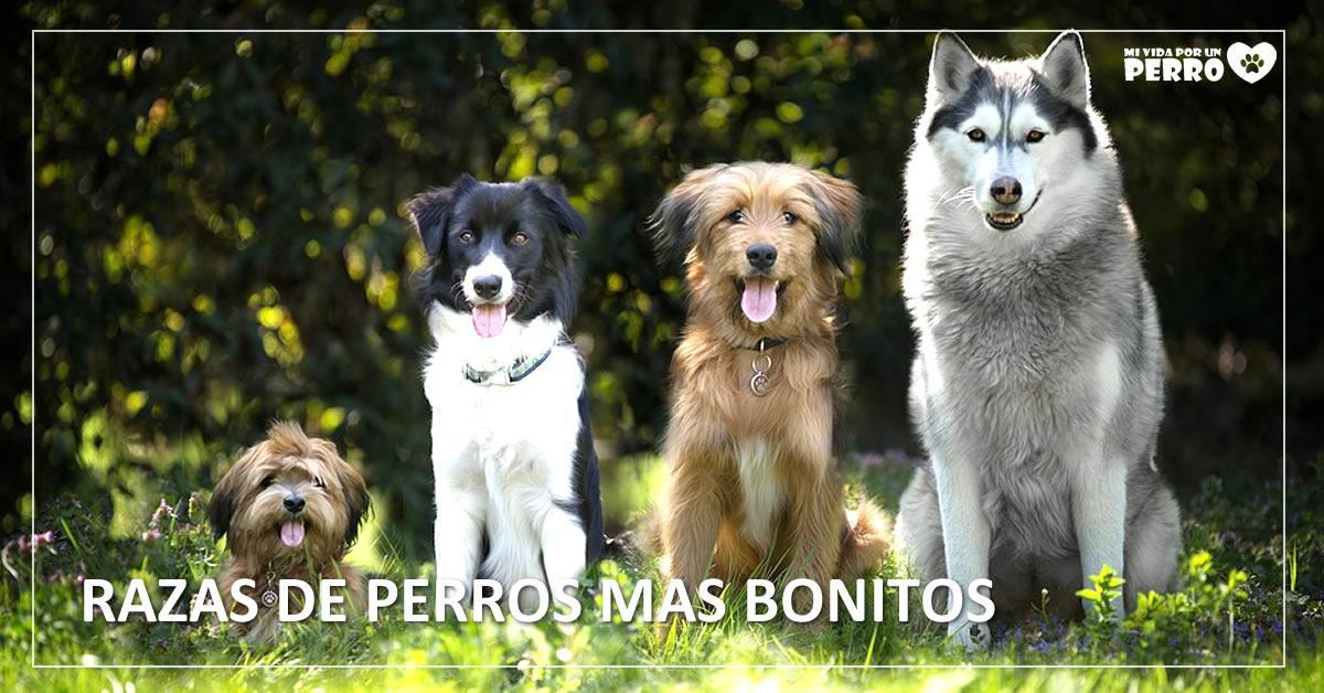 Razas de perros bonitos: listado y fotos de los perros más