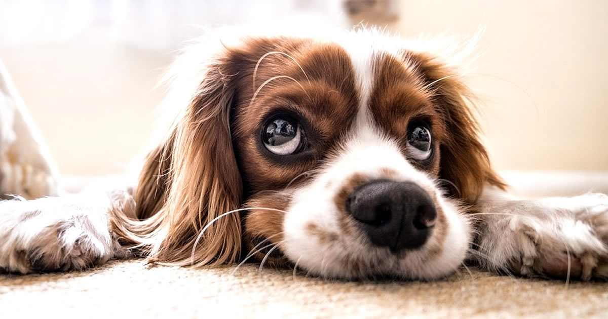 foto de perros con síndrome de down