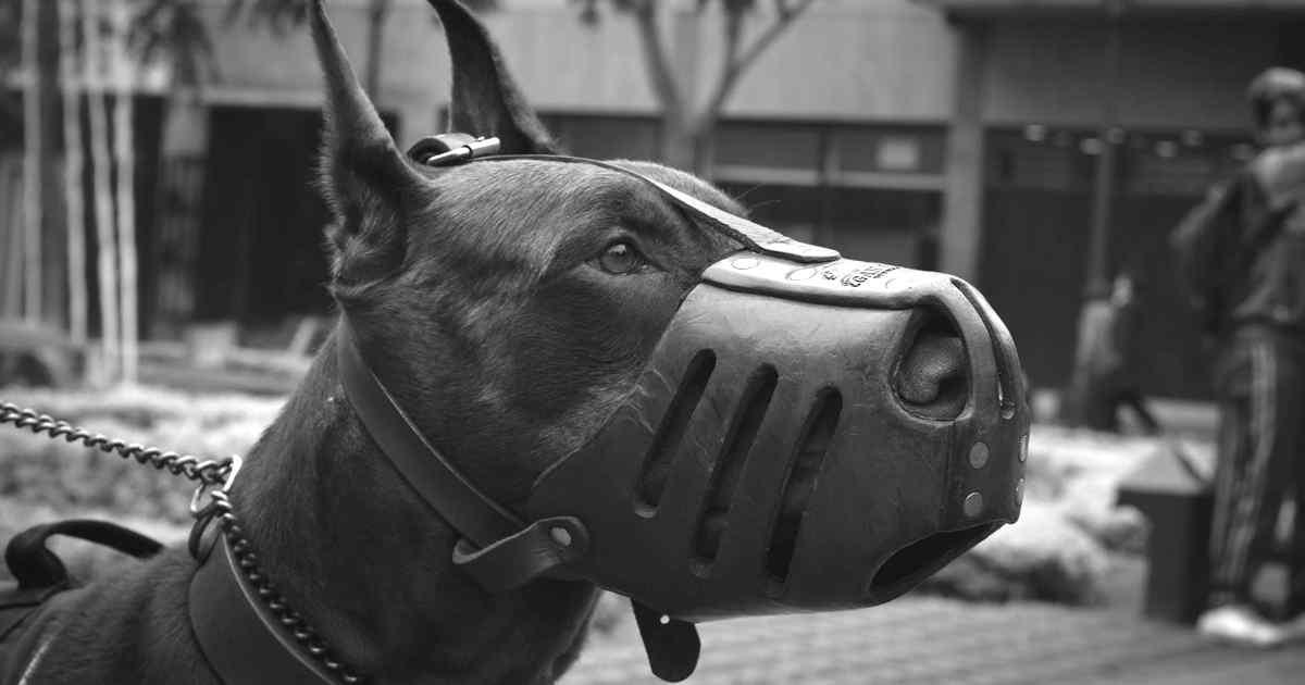 foto de perro potencialmente peligroso en españa