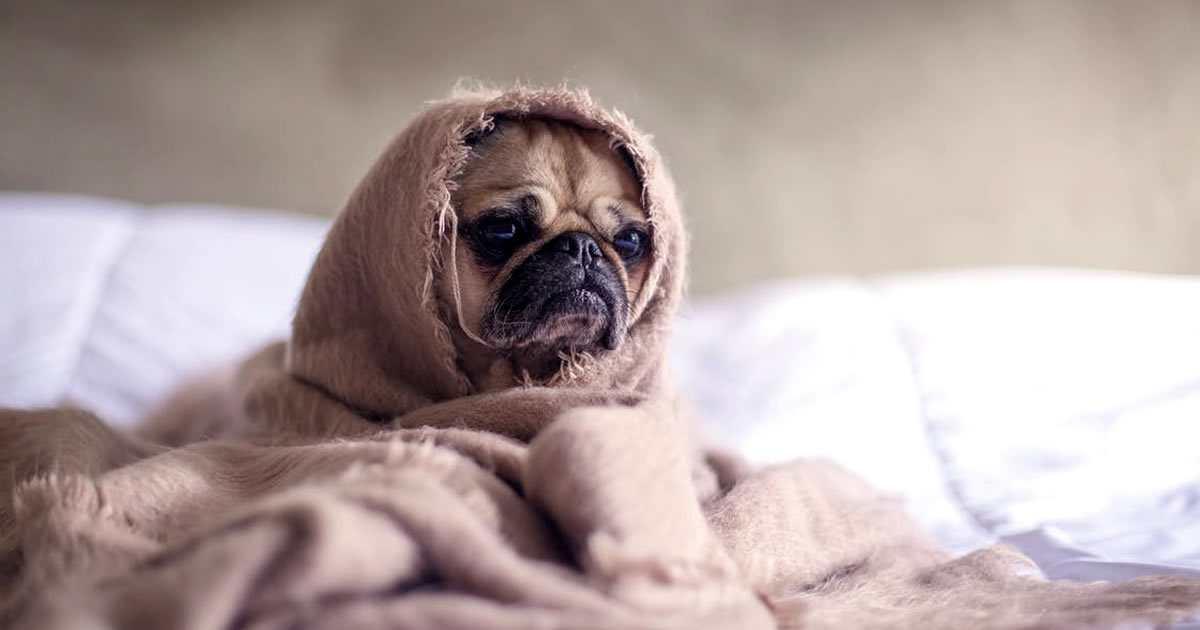 causas y síntomas de por qué tosen los perros