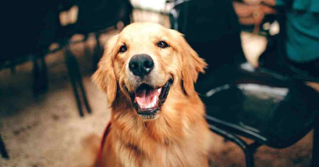 como saber los sintomas de ansiedad en perro y curar