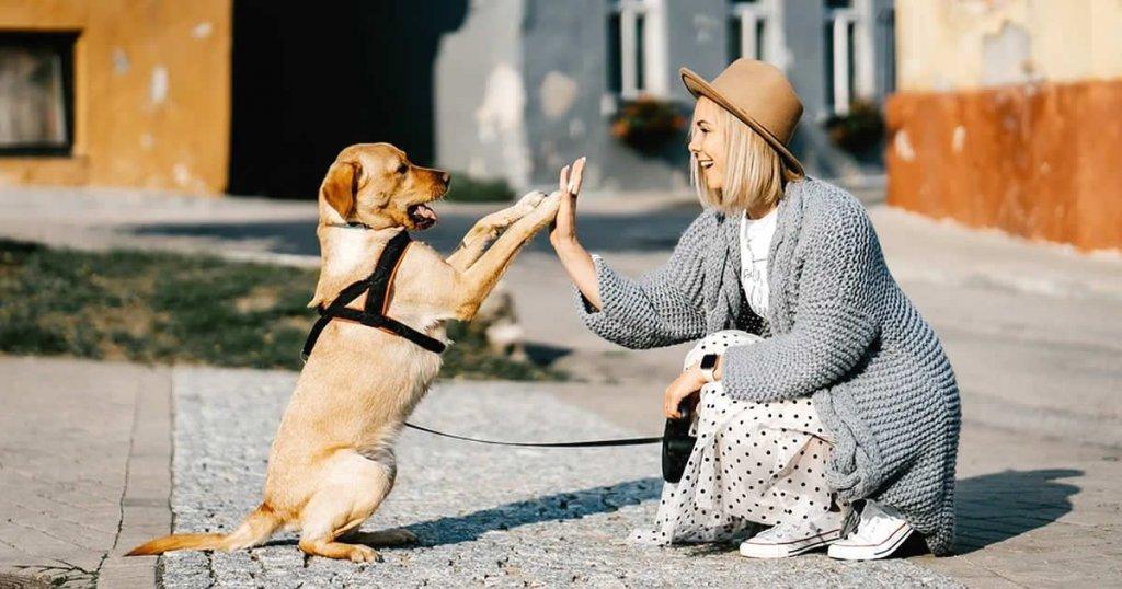 que es lo que más le gusta hacer a los perros con los humanos