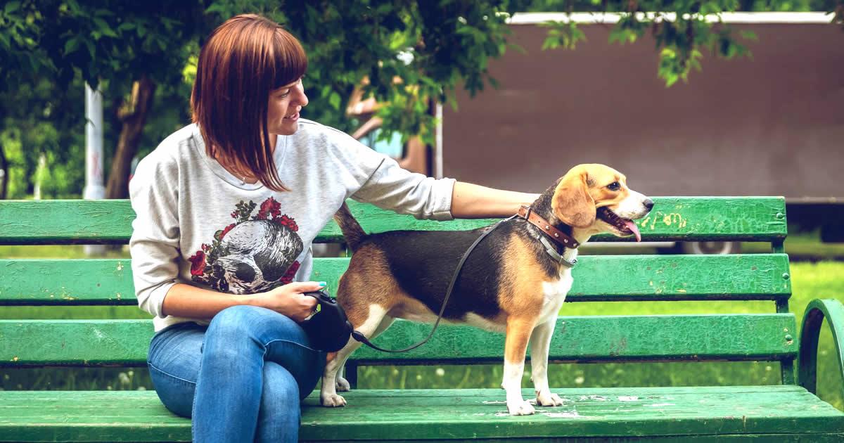 por qué es mejor adoptar un perro y no comprar un perro
