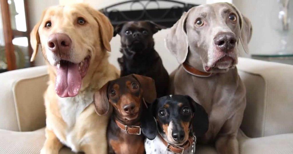 cuentas de perros famosos en instagram, harlow