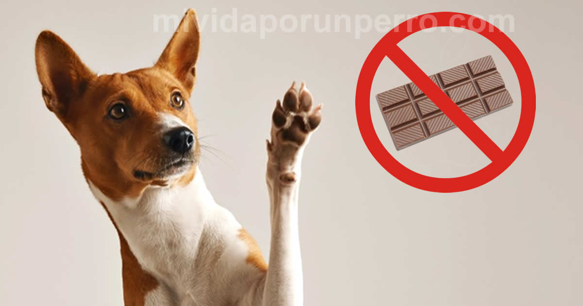 por qué los perros no pueden comer chocolate