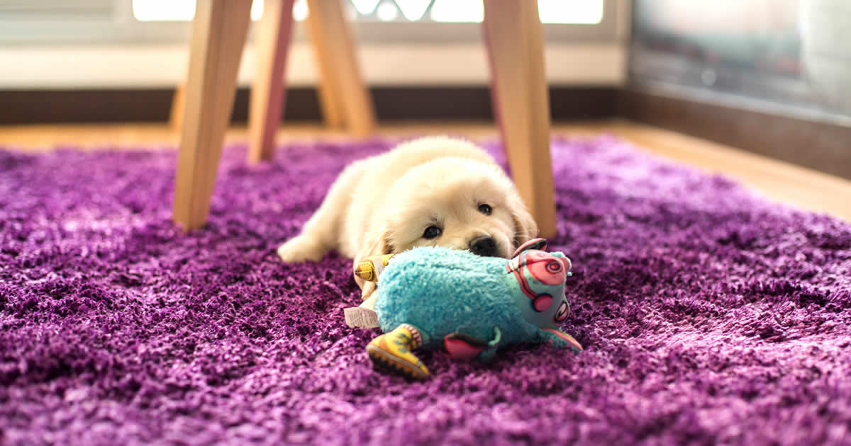 mejores juguetes para golden retriever, juegos para perros cachorros y adultos