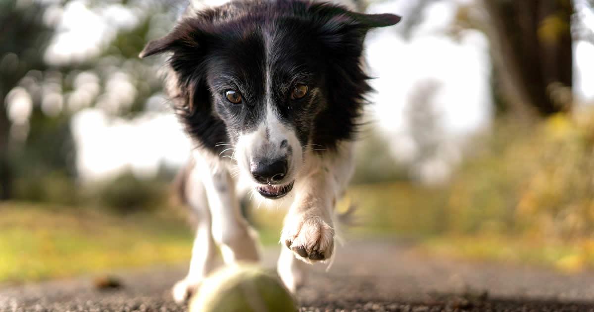 como curar el toc en los perros, perro con toc